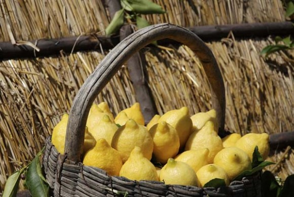 Discover lemon: nutritional and medicinal properties